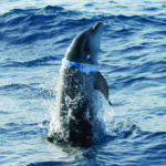 plastic_bag_dolphin_c_nina_strueh_meer_ev